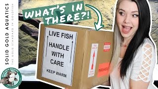 Unboxing My New MYSTERY FISH!
