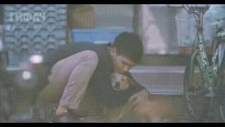 Парень обнимает бездомных собак.
