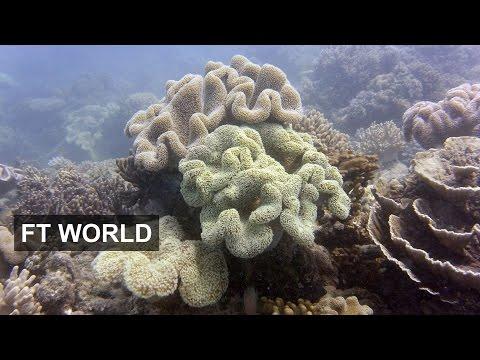 Great Barrier Reef Under Threat | FT World