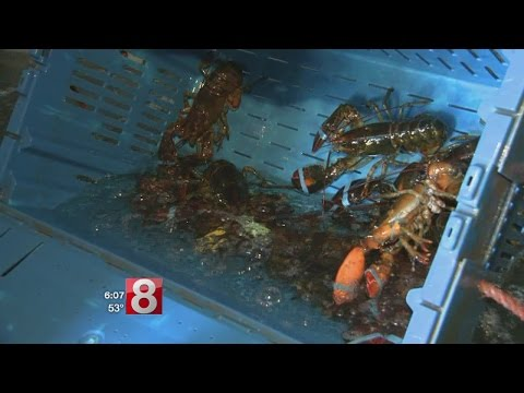 Plan to help save southern New England lobster population up for vote