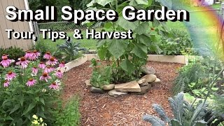 Small Space Garden Tour, Tips, & Harvest - Spinach, Kale, Carrots, Herbs