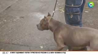 Как без проблем вывести собаку на прогулку