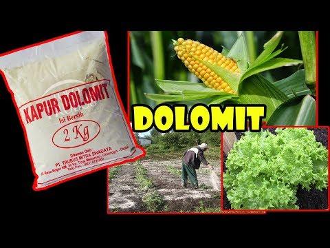 # TIS # CARA CEPAT Dolomit Menyuburkan Tanah-Tanaman..JOS ! Dolomite Can Fertile Soil?