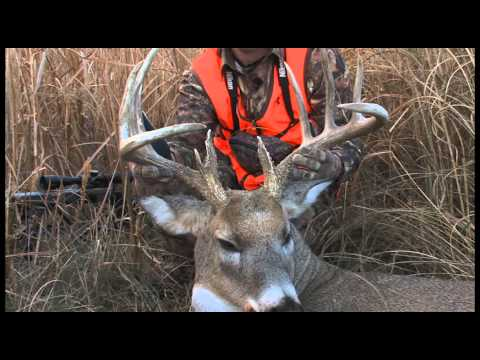 Decode Whitetail Buck Behavior with These Tips