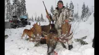 Охота. Охота 2013. Видео охота. Оружие. Охотничьи ружья. Ружьё. Охота на лося.  Лось.