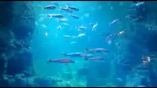 Akvaryum Köpek Balığı Attack