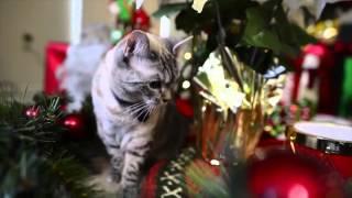 Сердитый кот, полковник Мяу и другие известные в Сети коты встретились в Голливуде