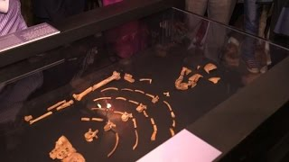 New Ethiopia museum opens to mark 40 yrs since 'Lucy' discovery