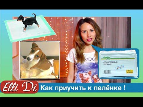 Как правильно приучить собаку к туалету на пеленку