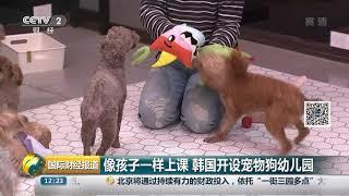 [国际财经报道]像孩子一样上课 韩国开设宠物狗幼儿园  CCTV财经