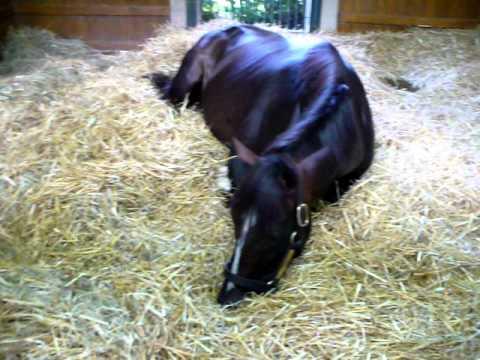 "Winstar Farms- Versailles, KY  Horse Farm - stallion ""Tiznow"" P1"
