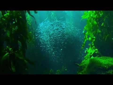 Fascinating Shoal Of Fishes