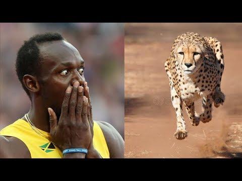 Вопрос: Кто самый быстрый хищник на Земле?