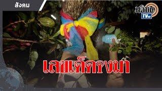 แห่ขอเลขเด็ด ต้นพิกุล อายุร้อยปี : Matichon TV