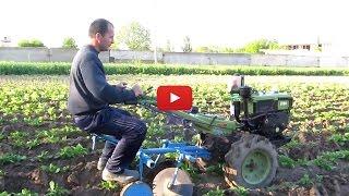 Окучивание картофеля мотоблоком / Hilling potatoes tillers