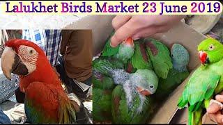 Pet birds online | Türkiye VLIP LV