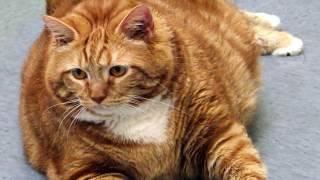 Интересные факты - Кошки (часть 2)