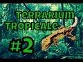 Terrarium tropicale pour gecko à crète