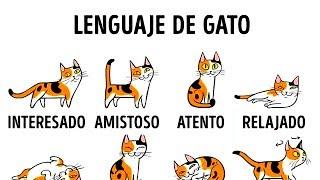 5 Maneras De Ser Amigo De Tu Gato