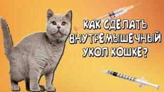 Как сделать внутримышечный укол коту!