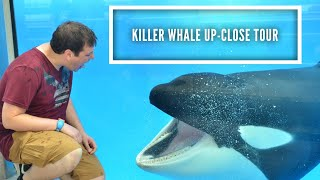 SeaWorld Orlando Vlogs Oct. 2018 | Killer Whale Up Close Tour & Q&A with Trainer | Day 5 Part 2