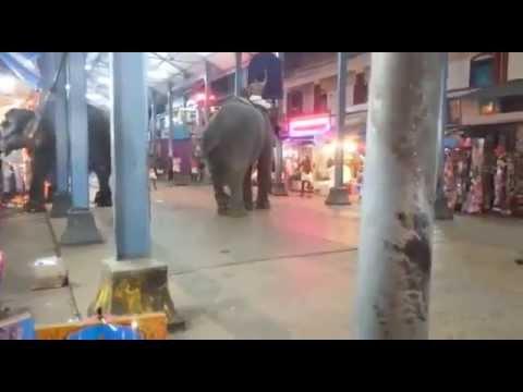elephant attack at Guruvayur temple 2015