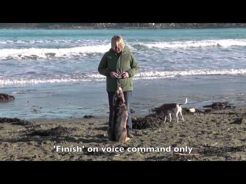 Dog Obedience, Tug Toy Training, Recalls