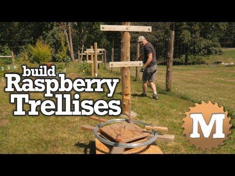 Build A Raspberry Trellis For The Garden