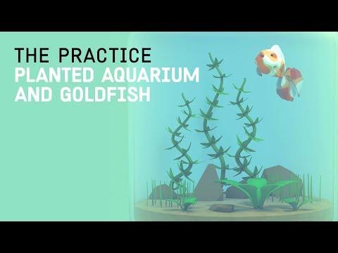 Tranquil 3d Aquarium and Goldfish // The Practice 71