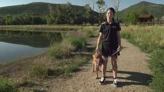 Dog Running - Important Reminders - Pro Plan P5 Training