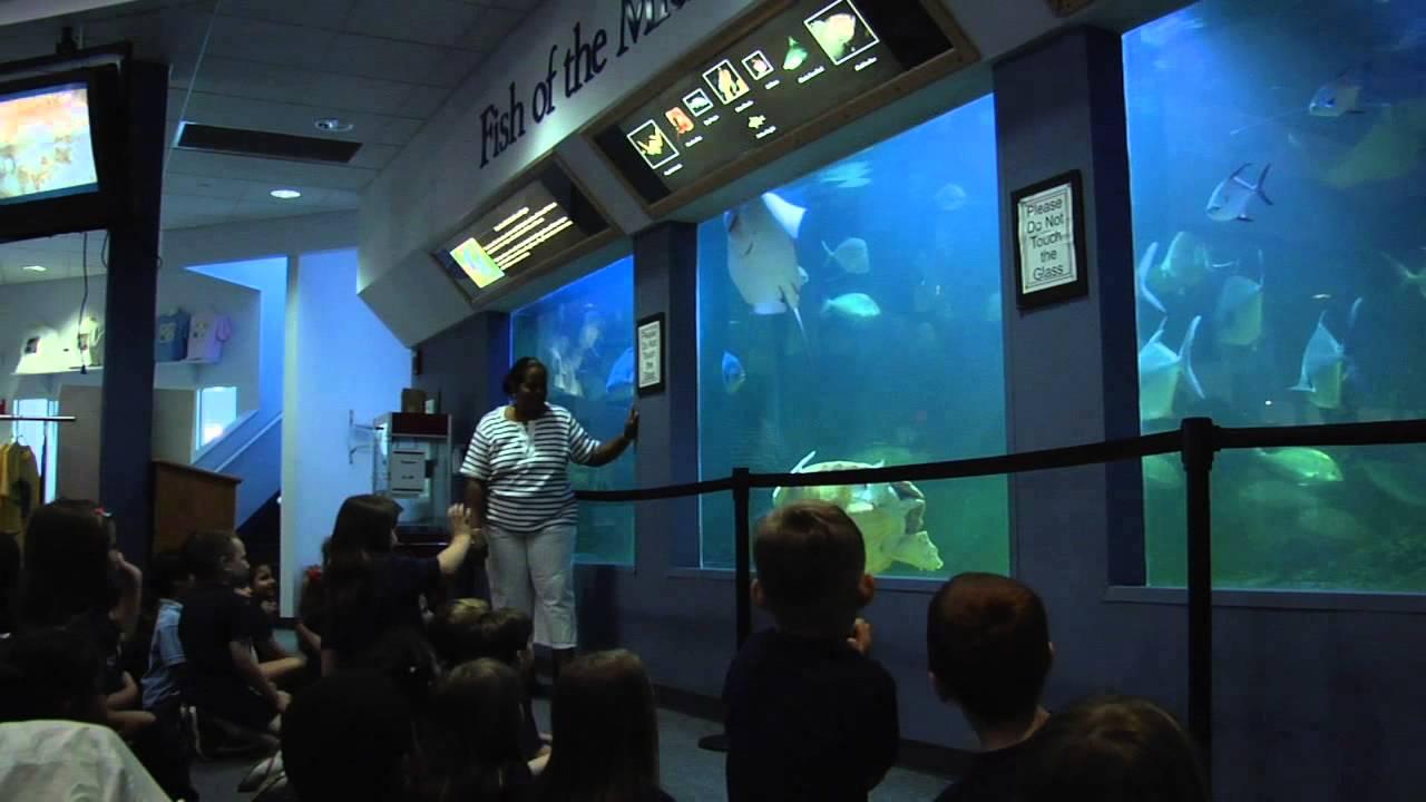 Atlanticare Aed Presentation At The Ac Aquarium Youtube