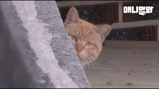 스스로를 지붕 위에 가둔 고영희씨의 사연 ㅣ Cat Confined Himself To The Rooftop