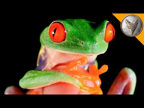 Thumbnail: World's Most Famous Frog!