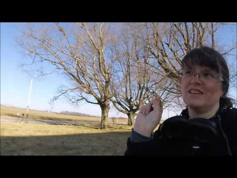 Metal Detecting first silver coins
