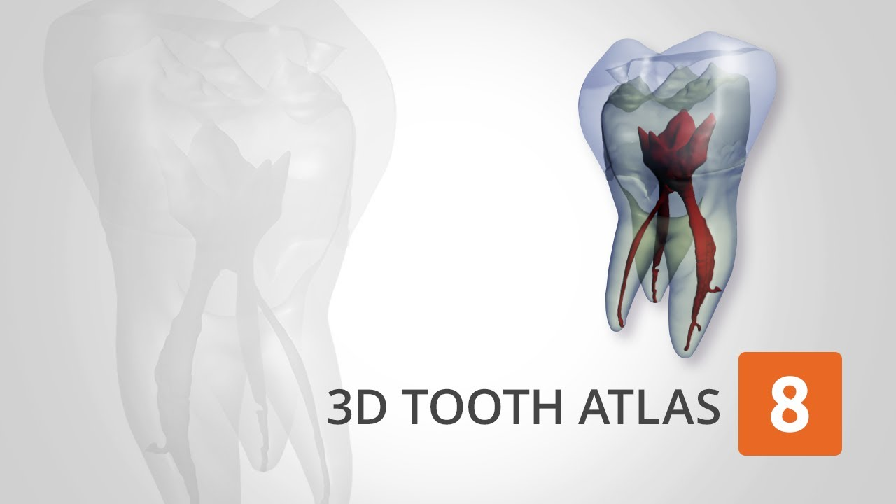 Ehuman Tooth Atlas V82 Youtube