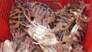 Ăn hải sản ngập mặt tại chợ đêm lớn nhất Miền Tây 1