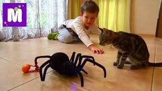 Паук Чёрная вдова распаковка игрушки на Радио управлении Black Widow Spider unpacking R/C toy