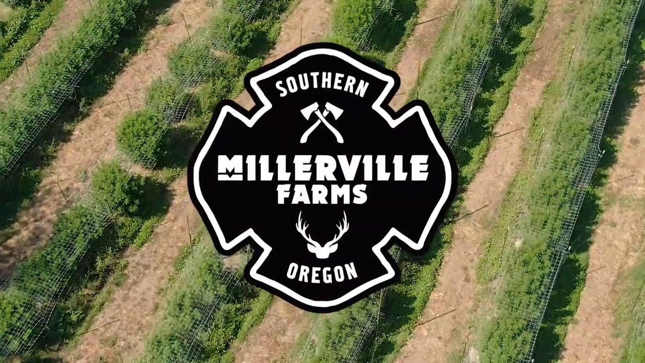 Download Millerville Farms 2019 | Oregon Cannabis Farm Tour ft. Alan Watts