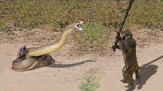 10 CRAZIEST ANIMAL FIGHTS CAUGHT ON CAMERA