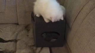Кошки в новом домике