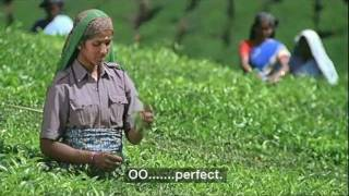 Typhoo Tea Plantation Advert No.3