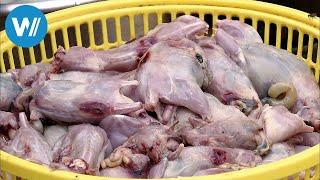 Kambodscha, Ratte süß-sauer (360° - GEO Reportage)