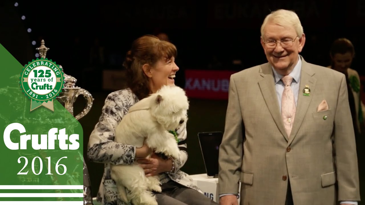 Adorable Westie Earns Best in Show at the 2016 Crufts Dog Show