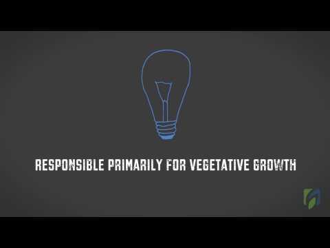 .光質對植物生長發育的影響(上)