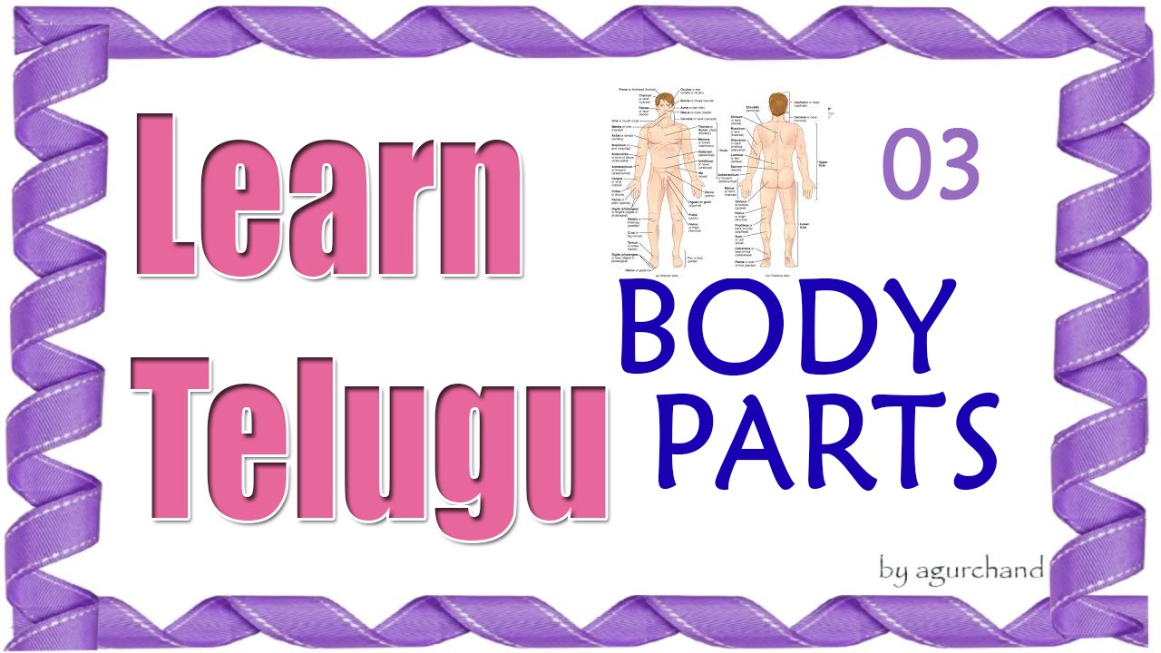 Learn Telugu Through English Body Parts 03 Anatomy Youtube