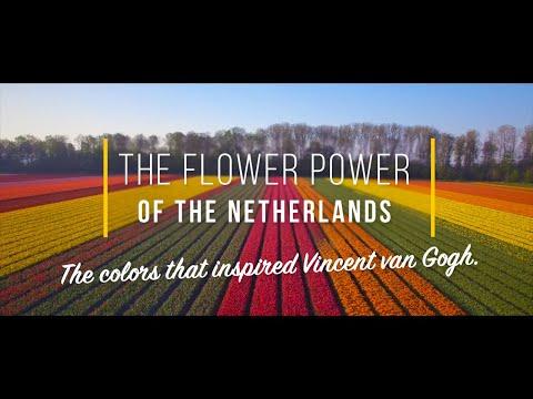 Tulips in the Netherlands - Flower Power of the Netherlands | World Largest Tulip Garden