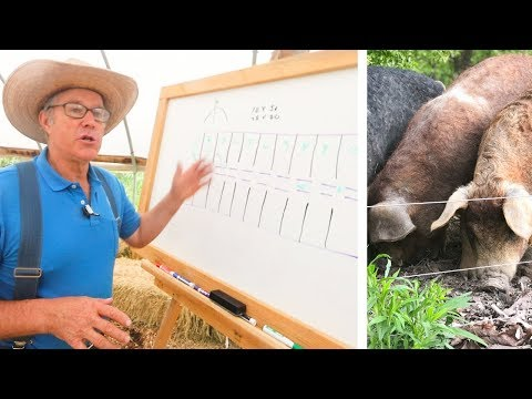 Joel Salatin Teaches Pasture Pigs (for Profit)