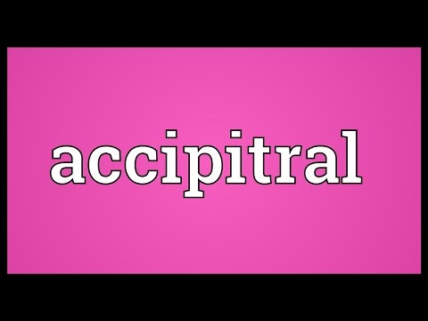 Header of accipitral