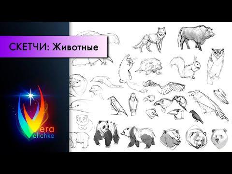 Стрим №142: как рисовать животных, базовые принципы