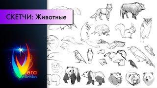Стрим №141: как рисовать животных, базовые принципы